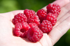 Raspberries in one's hand Stock Image