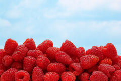 Raspberries over Blue Sky royalty free stock images