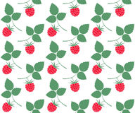 Raspberries. Pattern Royalty Free Stock Image