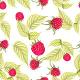 Raspberries pattern Stock Images