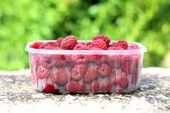 Raspberries. In a plastic packaging. Selective focus green natural background Royalty Free Stock Images