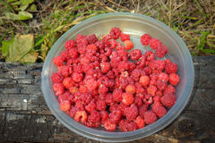 Raspberries in plate. Close Up Fresh Raspberries in the plate Stock Photo