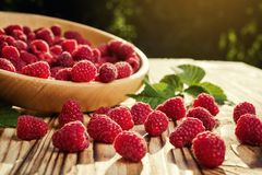Raspberries in a plate,in wooden bowl,basket/bush branch/growing. Raspberries,raspberries background closeup photo,high resolution product,Delicious first class Royalty Free Stock Photo
