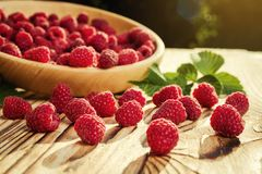 Raspberries in a plate,in wooden bowl,basket/bush branch/growing. Raspberries,raspberries background closeup photo,high resolution product,Delicious first class Royalty Free Stock Image
