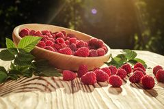 Raspberries in a plate,in wooden bowl,basket/bush branch/growing. Raspberries,raspberries background closeup photo,high resolution product,Delicious first class Royalty Free Stock Images