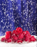 Raspberries in the Rain Royalty Free Stock Photos