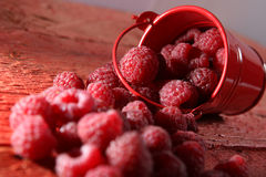 Raspberries in a red bucket. Too many raspberries and a red bucket on a wooden background Royalty Free Stock Image
