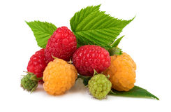 Raspberries red and yellow Stock Photos