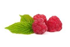 Raspberries Royalty Free Stock Photography