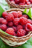 Raspberries. Ripe raspberries placed in baskets with raspberry leaves, sweet berry fruits Royalty Free Stock Image