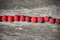 Raspberries in a row Stock Photography