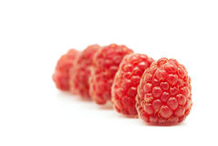 Raspberries in a row over white Royalty Free Stock Photography