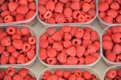Raspberries - rubus idaeus. Royalty Free Stock Photos
