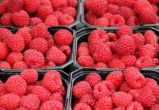 Raspberries. For sale at a farmers market in Flam, Norway Stock Photography