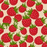 Raspberries seamless pattern Royalty Free Stock Photography