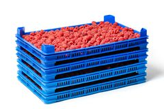 Raspberries in Several Crates on the Market. Fresh ripe red raspberries in several plastic crates on a wholesale market isolated on white Stock Photography
