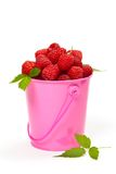 Raspberries. In a small pink metal bucket. Selective focus Stock Images