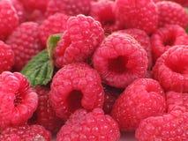 Raspberries. Some raspberries - food and drink series Stock Image