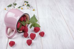Raspberries and the pink mug. Raspberries spilled out of the pink mug on the wooden table Royalty Free Stock Photo