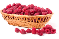 Raspberries spilled from a wicker basket isolated Royalty Free Stock Image