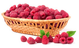 Raspberries spilled from a wicker basket isolated Stock Images