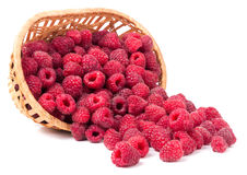 Raspberries spilled from a wicker basket isolated Royalty Free Stock Photos