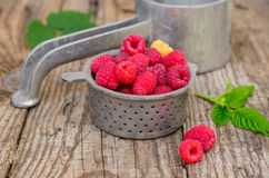 Raspberries in strainer. Ripe raspberries in steel strainer Royalty Free Stock Photography