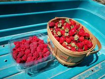 Raspberries and strawberries. Delicious, tasty, garden, summer royalty free stock image