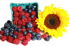 Raspberries and Sunflower Stock Images