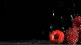 Raspberries in super slow motion receiving water stock video footage
