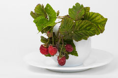 Raspberries in a tea cup Stock Image