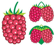Raspberries vector illustrations Stock Photo