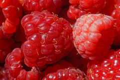 Raspberries very close up as background Royalty Free Stock Photo