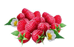 Raspberries   on white background. Raspberries   on white background ,closeup Stock Photography