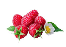 Raspberries   on white background. Closeup Stock Image