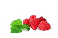 Raspberries on a white background Stock Photos