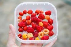 Raspberries in woman hand. Crockery with raspberries in woman hand Royalty Free Stock Photography