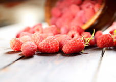 Raspberries in a wooden bowl. Juicy, ripe, mature raspberries in a wooden bowl Royalty Free Stock Photo