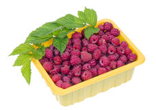 Raspberries in a yellow plastic container Royalty Free Stock Image