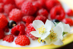 Raspberries on the yellow plate royalty free stock photography