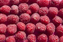 Raspberriesbackground with space for text Stock Photo