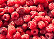 Raspberry. Red raspberry background close up Stock Images