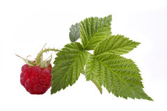 Raspberry. The raspberry with green sheet is isolated on the white Stock Photo