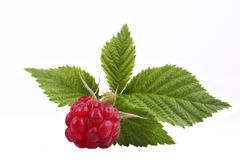 Raspberry. The raspberry with green sheet is isolated on the white Stock Photos
