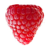 Raspberry Stock Photography