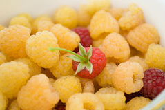 Raspberry. A ripe yellow raspberry, only - that the collected Royalty Free Stock Image