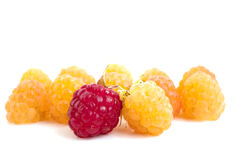 Raspberry. On a white background Stock Images