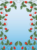 Raspberry. Floral frame with a raspberry. Vector illustration Royalty Free Stock Photo