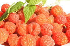 Raspberry. With green warm on it, close up Royalty Free Stock Photos