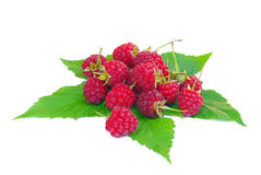 Raspberry Stock Photo